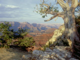 Grand Canyon National Park, Arizona, USA Photographic Print by Olaf Broders