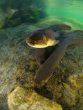 Longfin Eels, New Zealand Fotografie-Druck von Tobias Bernhard
