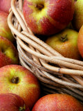 Cox's Apples, Apples in Basket Photographic Print by Susie Mccaffrey
