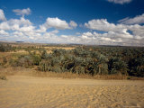 Baharia Oasis in the Desert, Egypt Photographic Print by Mike England