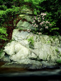 Mountain Laurel, Along Little River, USA Photographic Print by Willard Clay