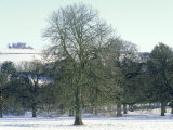 Horse Chestnut in Winter, UK Photographic Print by Mike England