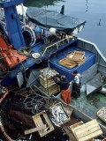 Fishermen Crating up Sardine, Ribeira, Spain Stampa fotografica di David Cayless