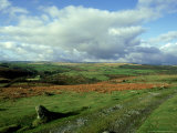 Dartmoor, Devon Photographic Print by David Cayless