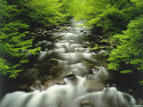 The Middle Prong of the Little River in Late Spring, Tennessee, USA Photographic Print by Willard Clay