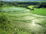 Rice Terraces, Bali Photographic Print by John Downer
