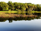 Sabal Palm and Live Oak Forest Lining the Banks of the River, Myakka River State Park, Florida, USA Photographic Print by David M. Dennis