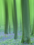 Impressions of a Bluebell Woodland, May, Spring Scotland, U K Photographic Print by Mark Hamblin