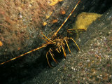 Crawfish, County Kerry, Ireland Photographic Print by Paul Kay