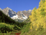 Quaking Aspens, and Maroon Bells in Autumn, Colorado Photographic Print by Adam Jones