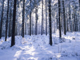 Forest in Winter, Alsace, France Photographic Print by Philippe Henry