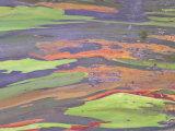 Rainbow Eucalyptus, Bark Pattern, Botanical Garden Photographic Print by Stan Osolinski