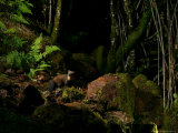 Pine Marten at Night, the Highlands, Inverness-Shire Photographic Print by Elliot Neep