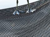 Coot, Abstract of a Coots Legs Perched on Plastic Mesh, London, UK Photographie par Elliot Neep