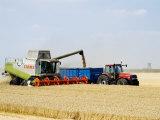 Combine Harvester Unloading Grain into Trailer, England Fotografisk tryk af Martin Page