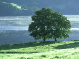 Lakeside Trees, Lake District, England Photographic Print by Iain Sarjeant