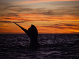 Southern Right Whale, Female at Sunset, Valdes Penin Photographic Print by Gerard Soury