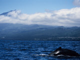 Humpback Whale, About to Dive, Azores Photographic Print by Gerard Soury