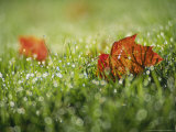 Fallen Autumn Leaf, Scotland Photographic Print by Iain Sarjeant
