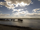 African Elephant, Herd Drinking, Botswana Photographic Print by Mike Powles
