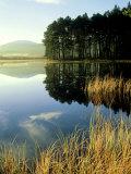 Loch Garten, Strathspey, Scotland Photographic Print by Iain Sarjeant