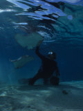 Hawai Sting Ray, with Diver, Polynesia Fotografie-Druck von Gerard Soury