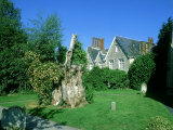 Remaining Stump from Gilbert Whites Famous Yew, Selborne Churchyard Photographic Print by David Tipling