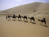Camels in Caravan Walking in Desert, Morocco Print by Michael Brown