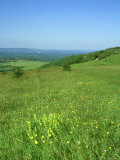 Harting Down, Sussex, UK Photographic Print by Ian West