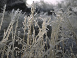 Icy Grass, Boulder Photographic Print by Michael Brown