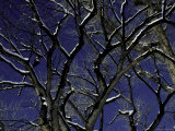 Winter Trees, Boulder Photographic Print by Michael Brown