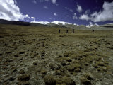 Trekking in Tibet Poster by Michael Brown