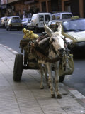 Jackass with Carriage on a Street in Morocco Prints by Michael Brown