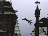 Ape Jumping, Nepal Photographic Print by Michael Brown