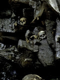 Skulls Amongst Rocks, Indonesia Photographic Print by Michael Brown