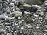 A Bird in the Rocks, Tibet Prints by Michael Brown