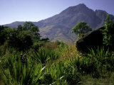 Hikers Walk Through Plants with Mountain in Background, Madagascar Posters by Michael Brown