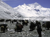 Yaks and Sherpas at the Foot of Himalayan Mountain Range Reprodukcja zdjęcia autor Michael Brown