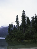 Calm Lake with Trees, Chile Photographic Print by Michael Brown