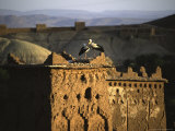 Birds on Structure, Morocco Photographic Print by Michael Brown