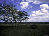 Trees in Kwazulu Natal, South Africa Photographic Print by Ryan Ross
