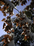 A Tree Covered with Snow, Boulder Photographic Print by Dörte Pietron