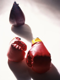 Pair of Boxing Gloves Photographic Print