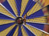 Dart on the Bull's-Eye of a Dart Board Photographic Print