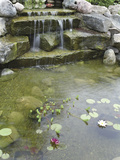 Pond with Waterfall Photographic Print