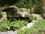 Garden Pond with Waterfall Photographic Print