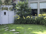Path to the Garden Gate Lined with Daylilies Photographic Print