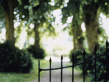 Blurred Image of a Gate and Woodland Path Photographic Print
