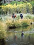 Green Creek, California, USA Photographic Print