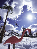 Low Angle View of a Swan Sculpture in The Snow Photographic Print